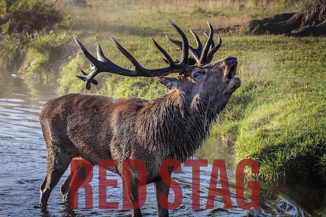 Redstag Hunting
