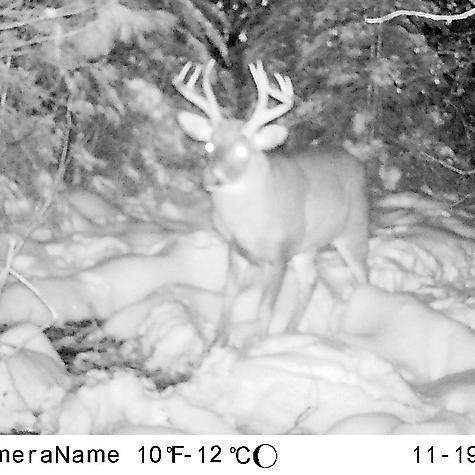 2018 Whitetail Season